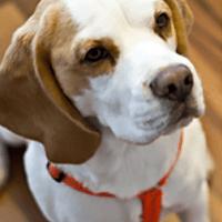 Woody Rapp Hund